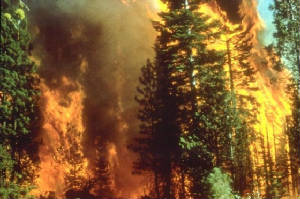 Wildfire_in_California-bureau-of-land-management.jpg